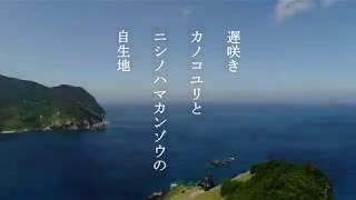 下甑島のカノコユリとニシノハマカンゾウ