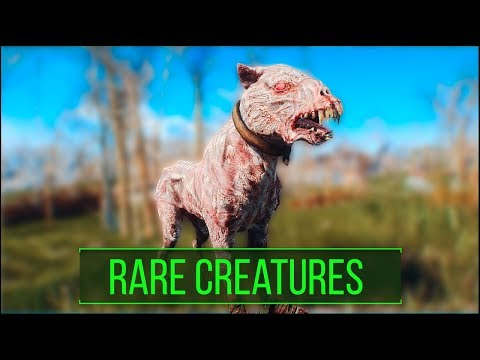 Fallout 4: 5 Rare and Interesting Creature Types You May Have Missed - Fallout 4 Secrets (Part 5)
