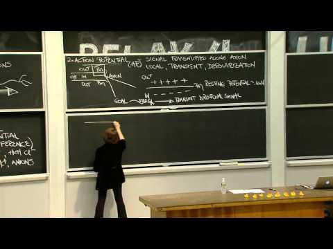 24. Neurobiology 1 - YouTube