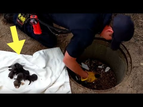 Firefighters Saved These Pups From A Storm Sewer – Then Suddenly Realized They Weren't Dogs