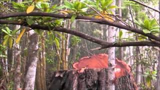 Bow Down - Xavier Rudd