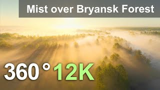 Misty Morning. Spring Forest Relaxation. Bryansk Forest, Russia. 360 aerial video in 12K