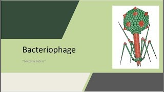 "Bacteriophage - ""bacteria eaters"""