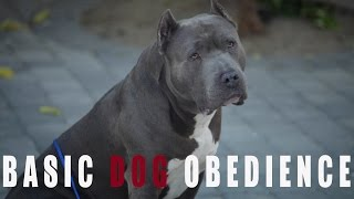 BASIC DOG OBEDIENCE TRAINING: SIT STAY AND DOWN