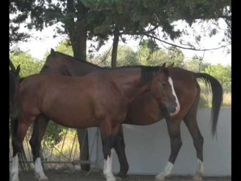 Risposte reali su attivatori di cavallo