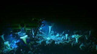 Deep Sea Spongetopia on Explorer Seamount | Nautilus Live | Kholo.pk
