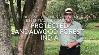 indian sandalwood - Free video search site - Findclip