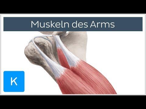 Schmerzen im Rücken unterhalb der Taille aufgeben