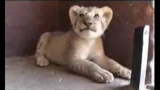 Кевин Ричардсон, Большое красивое видео