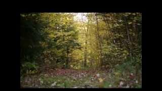 Segnali di vita - Franco Battiato
