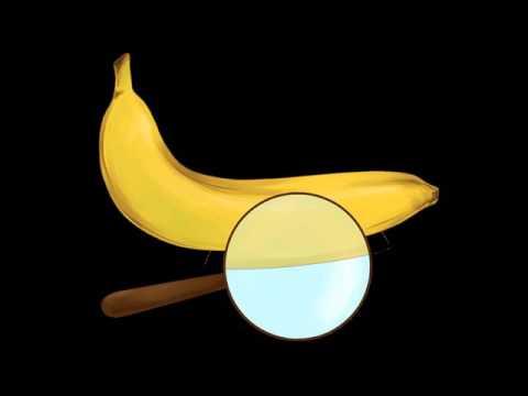 Бананы и линзы, выпуск 33