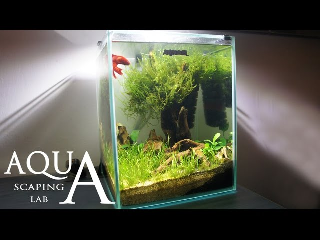 Aquascaping Lab - Tutorial Nano Cube Aquarium (size 20 x 20 x 25H 10L) Grass and wood style