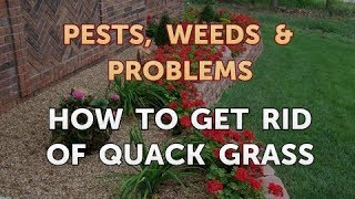How to Get Rid of Quack Grass