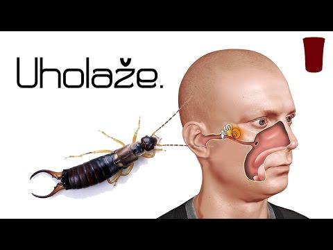Parazitózis hasnyálmirigy