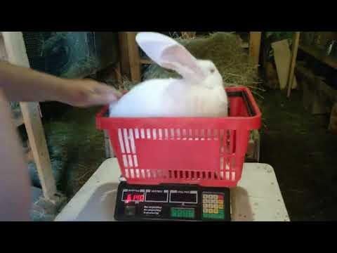 Супер рост кроликов,такого я ещё не видела.