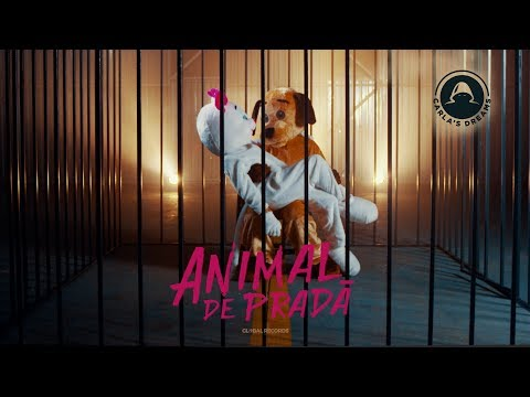 Carla S Dreams – Animal de prada Video