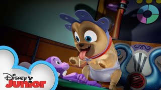 Young Pups | Puppy Playcare | Puppy Dog Pals | Disney Junior