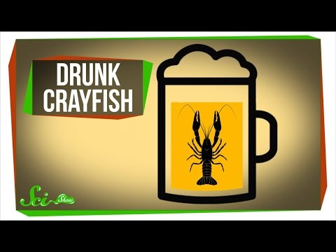 Getting Crayfish Drunk... For Science!