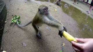 Драка обезьян. ЖЕСТЬ!!!!!!