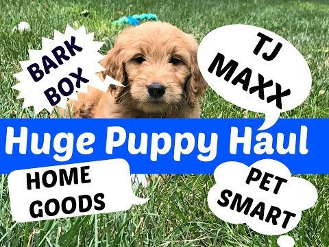 Our New Puppy | Bark Box | Puppy Haul TJ Maxx, Home Goods, Pet Smart