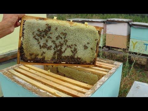 Анализ зрелости мёда на стационарне в ГВ