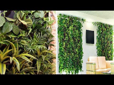 Живые стены или фито стены.  Какие растения для этого можно использовать ?