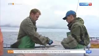 Как ловят сайру на курильских островах