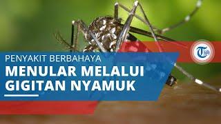 Demam Berdarah, Penyakit yang Menular Melalui Gigitan Nyamuk