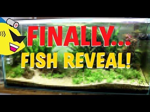 BIG FISH REVEAL! 40 NEW FISH IN THE AQUARIUM!