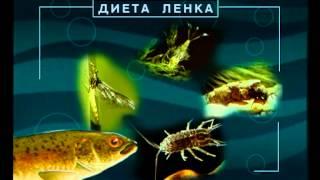 Диалоги о рыбалке-рыбалка в казахстане