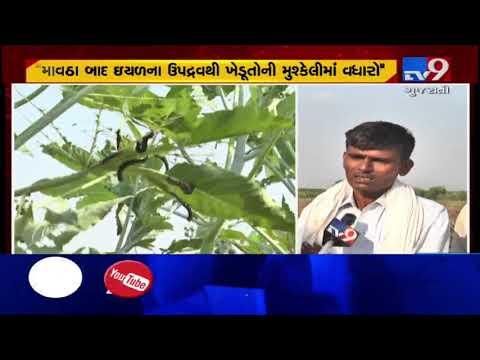 Worm devastating crops in Kutch, Patan and Banaskantha | Tv9GujaratiNews