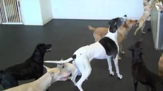 Northwest Animal Hospital Daycare