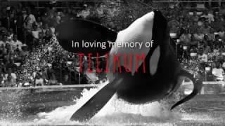 [ Tilikum ] Goodbye, Friend.