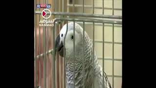 Попугаи читает Коран  الببغاء يقرأ القرآن