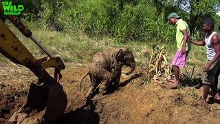 Baby Elephant Rescue Compilation. Funny baby elephants chasing humans