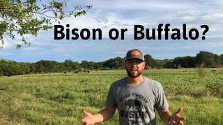Which is it? Bison or Buffalo?
