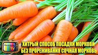 Хитрый способ посадки моркови без прореживания видео