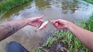 Spinning na Rzece Pilica | Okonie na Woblery i Obrotówki (eng subs)