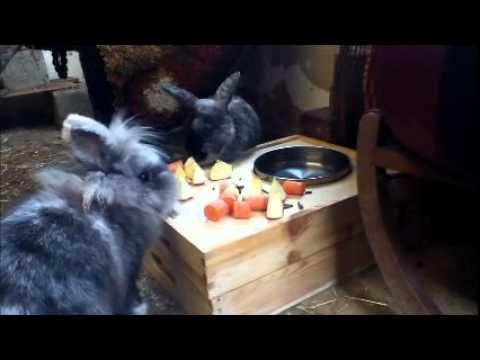 Kaninchentränke 8.wmv  Das Ergebnis