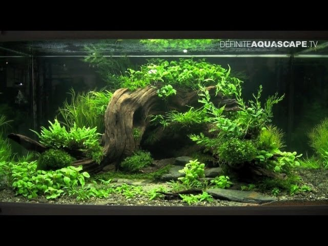 Aquascaping - The Art of the Planted Aquarium 2013 XL pt.2