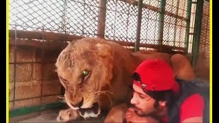 Most Unusual Pets Ever ✯  Exotic Pets  ✯  Pet Wild Animals ✯ Eagle,Tiger,crocodile,Jaguar