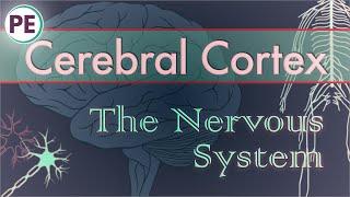 The Nervous System: Cerebral Cortex