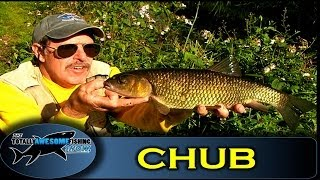 Chub fishing with cheese bait - Series 1 - Episode 2 - TAFishing