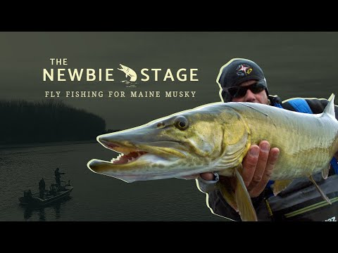 Freshwater video of Muskie uploaded by Maine Fishing Adventures