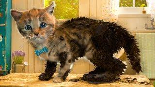 ПРИКЛЮЧЕНИЕ МАЛЕНЬКОГО КОТЕНКА мультфильм про котят мультик для детей и малышей #КИД #ПУРУМЧАТА