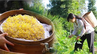 Video : China : Beansprouts 豆芽 - growing and cooking