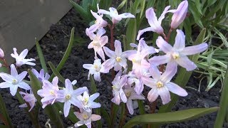 Весна в моём садике  Мы гуляем
