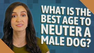 What is the best age to neuter a male dog?