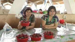 Uzbekistan, Taszkient i Chiwa. Podróże Pawła Krzyka, skrót filmu