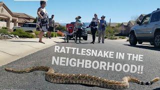 Removing RATTLESNAKE From Local Neighborhood!!